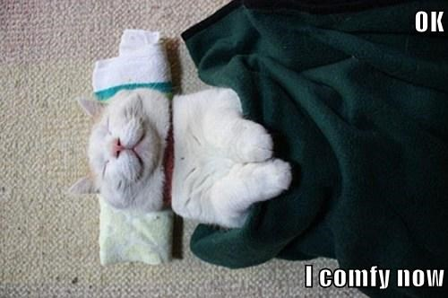 Cats,cute,blanket,comfy