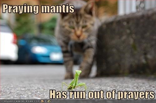 Cats prayer hunt praying mantis - 7936252672