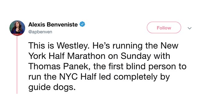 dogs history guide dogs blind marathon new york - 7936261