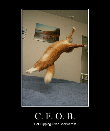 C. F. O. B. Cat Flipping Over Backwards!