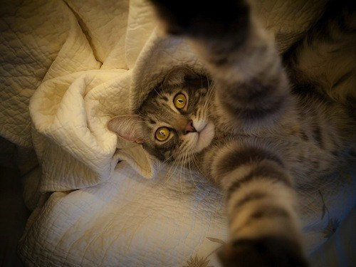 amazing selfies taken by cats or at least look like it was