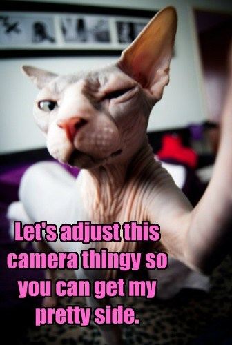 camera Cats funny naked - 7936546816