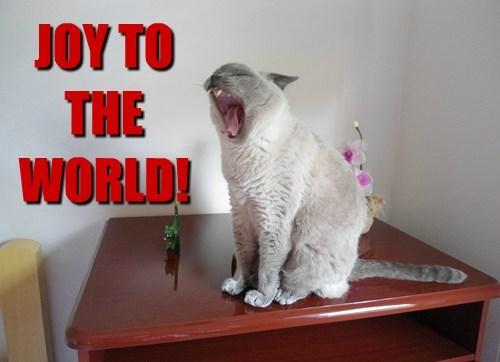 Cats christmas funny joy to the world - 7936547840