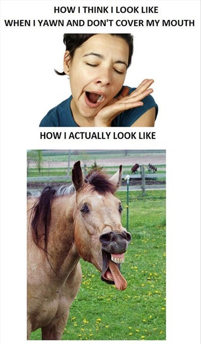 funny,horses,what I think,yawn