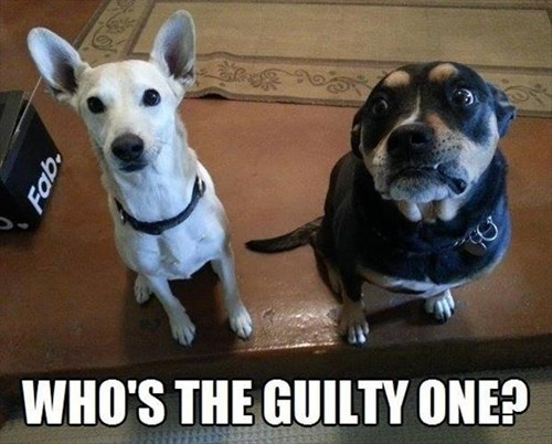 cute dogs guilty