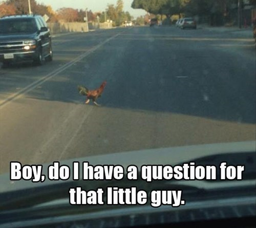 chicken jokes funny road riddles rooster