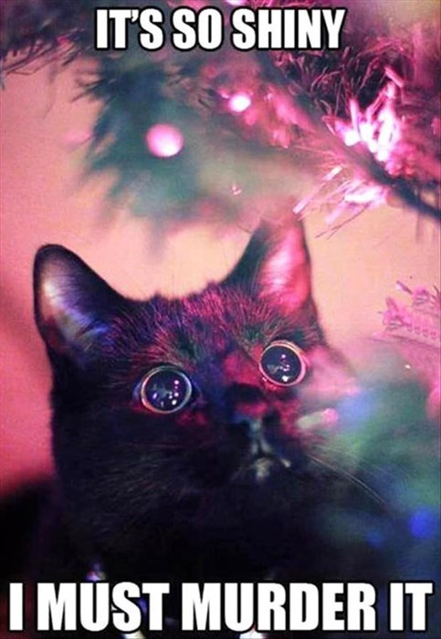 Cats,christmas,murder,shiny,trees