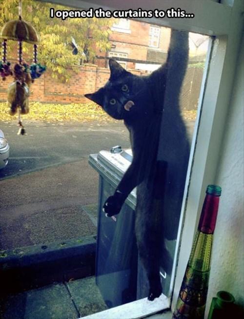 Cats cute curtains sneak noms - 7938157824
