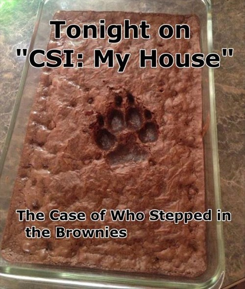 brownies,dogs,funny,guilty