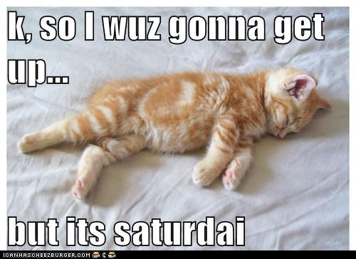 Cats cute kitten sleep saturday - 7938247936