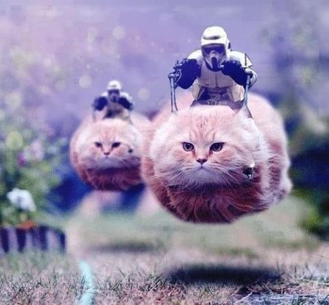 Cats,speeders,stormtrooper