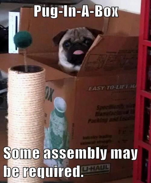 box,cute,assembly,pugs