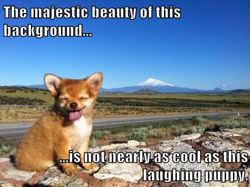 cute background dogs laugh funny - 7939152384
