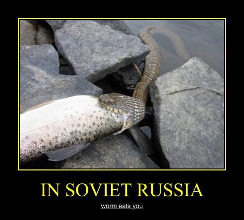 fish funny snake Soviet Russia - 7939302912