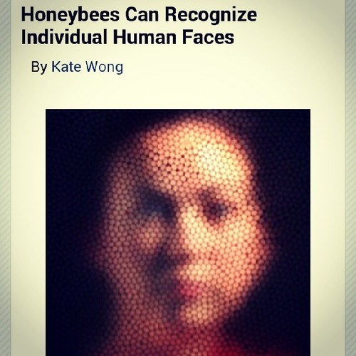 Image of a woman's face as would appear in a honey comb filter that clearly all bees have.