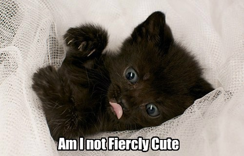 cute fierce kitten scratch - 7939578624