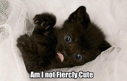 cute fierce kitten scratch - 7939578624