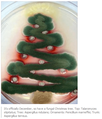 christmas tree fungus funny science - 7939615744