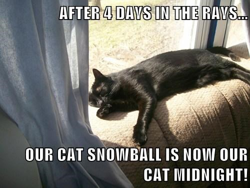 Cats black UV rays sun cat memes - 7939631104