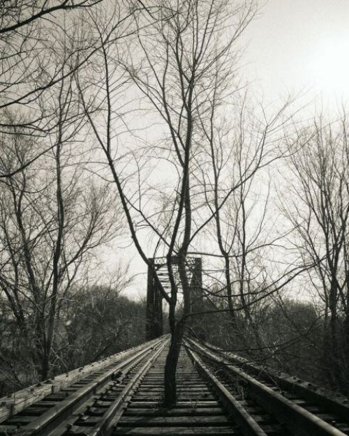 train tracks,trees,wtf