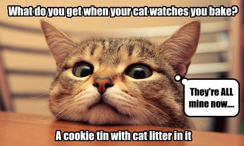 What do you get when your cat watches you bake? A cookie tin with cat litter in it They're ALL mine now....