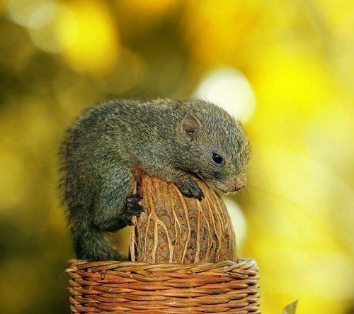 Babies cute nuts squirrels squee - 7939728896