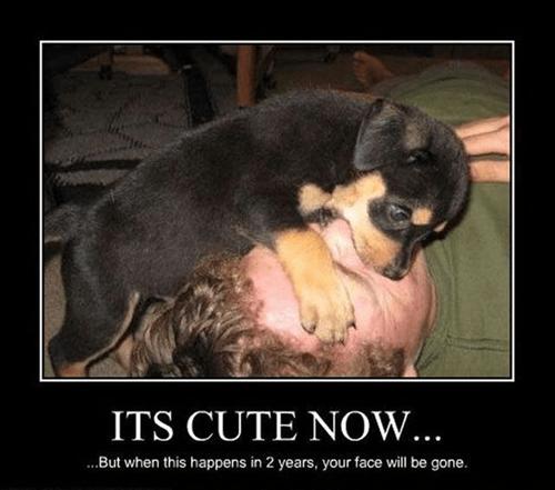 face eaten funny puppy wtf - 7939837440