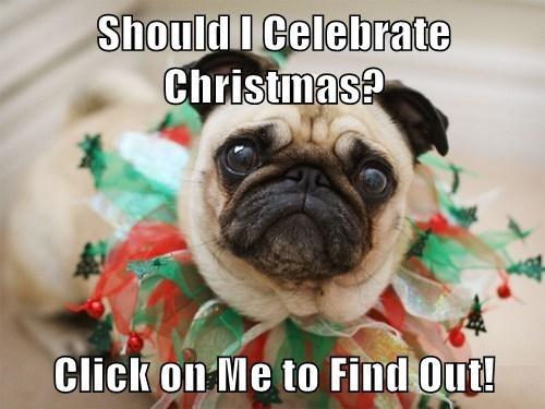 christmas,gifs,list,pugs