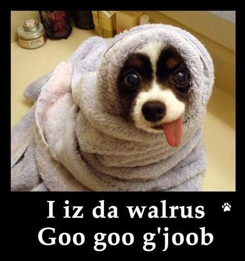 derp beatles funny walrus - 7940040704
