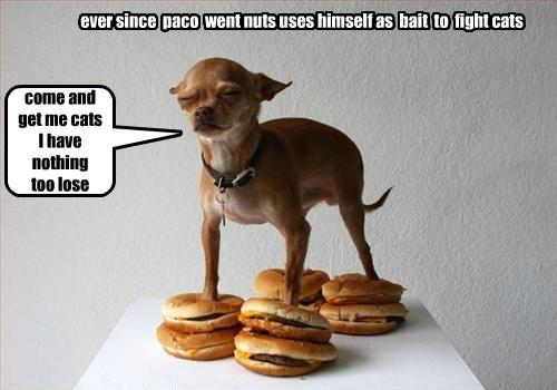 Cheezburger Image 7940860672
