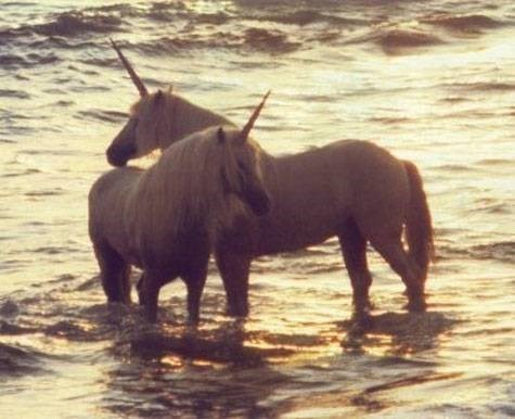 Screen grab of a funny hoax on Craigslist of a person claiming to have two unicorns for sale.