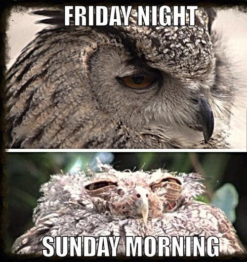 animals,owls,the weekend