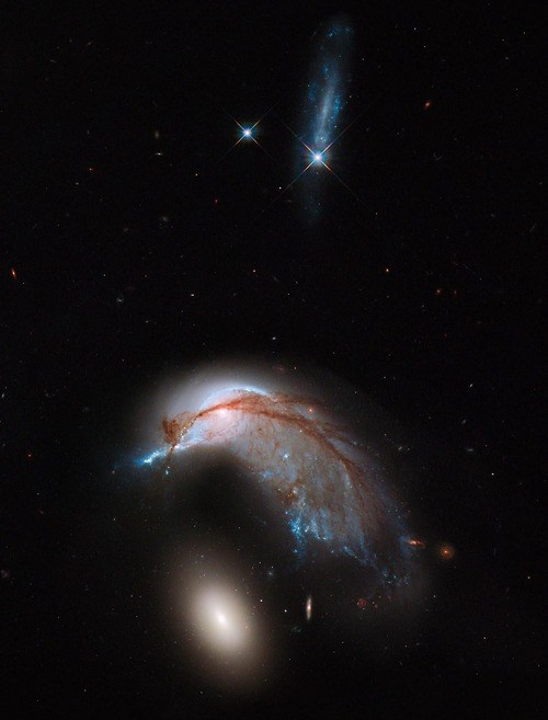 egg galaxy funny science penguin wtf Arp 142 - 7941458176