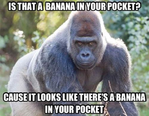 banana gorillas literal apes funny - 7941609216
