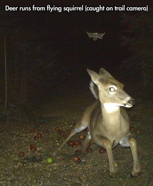 scary squirrels deer apples funny - 7941647616