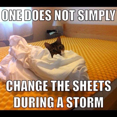 Cats,bed,sheets,storm,warm