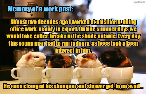 Memory of a work past: Almost two decades ago I worked at a fishfarm, doing office work, mainly in export. On fine summer days we would take coffee breaks in the shade outside. Every day this young man had to run indoors, as bees took a keen interest in him. He even changed his shampoo and shower gel, to no avail...