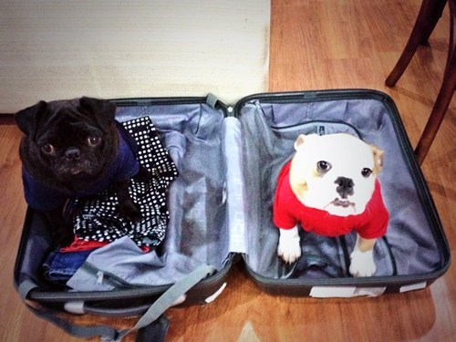 dogs packing luggage trips