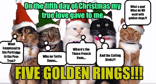 Cats,cute,birds,christmas,delicious,twelve days of christmas