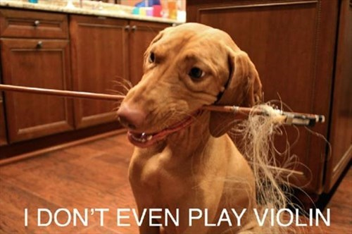 chew dogs destroy violin stringed instruments - 7945329408