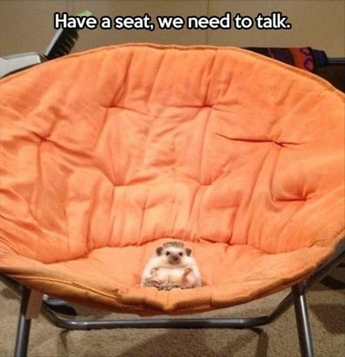 cute hedgehog lecture papasan - 7945338368