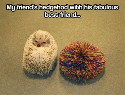 cute,brothers,funny,Nerf,hedgehogs,twins