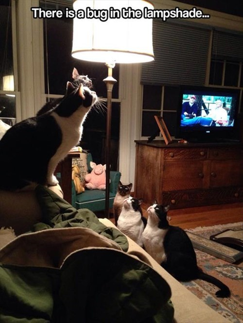 Cats,indoor,funny,lamp shade,hunt