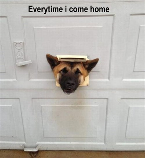cute arrive dogs funny mail