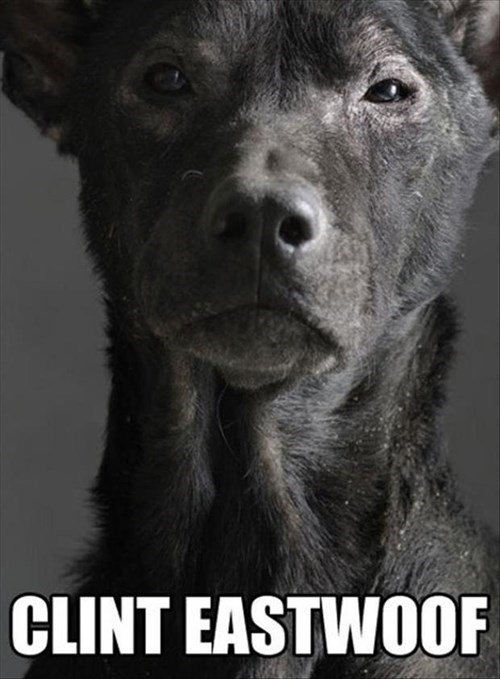 dogs,Clint Eastwood,looks like,hollywood,puns