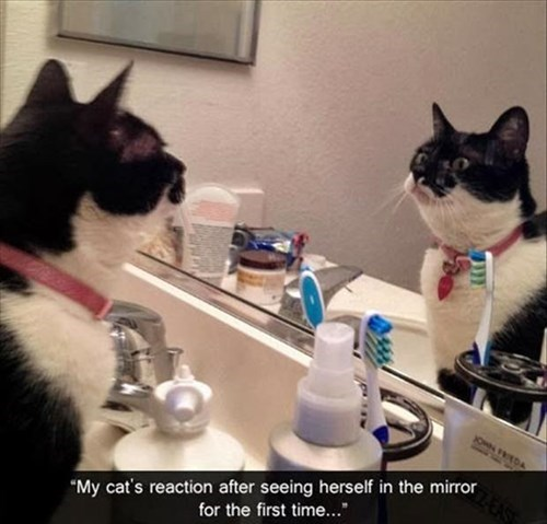 Cats,reflection,funny,handsom
