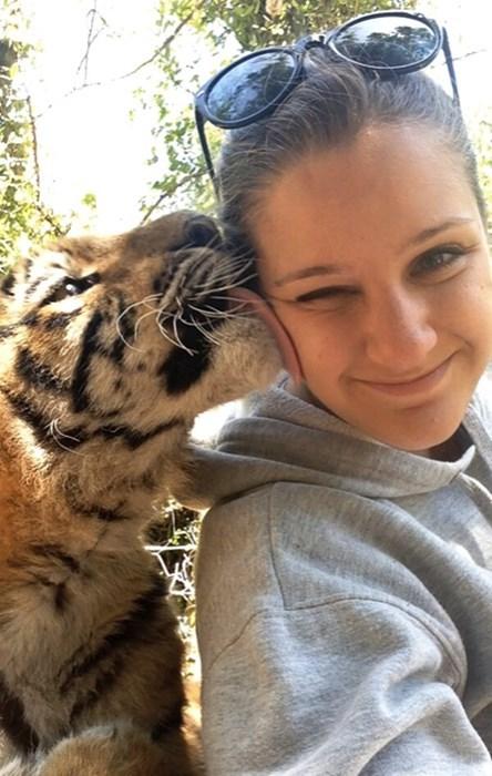 cute bite KISS taste tigers people - 7945369088