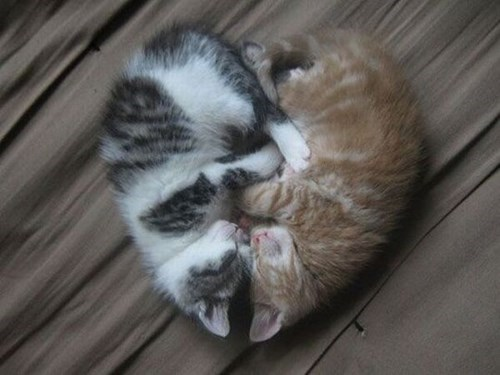 Cats cute heart snuggle kitten love - 7945374976