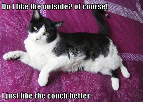 Cats cute funny outside - 7945383936