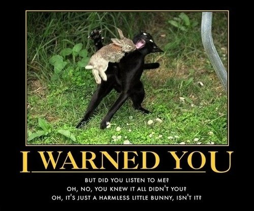 cat funny rabbit warning wtf - 7945399296